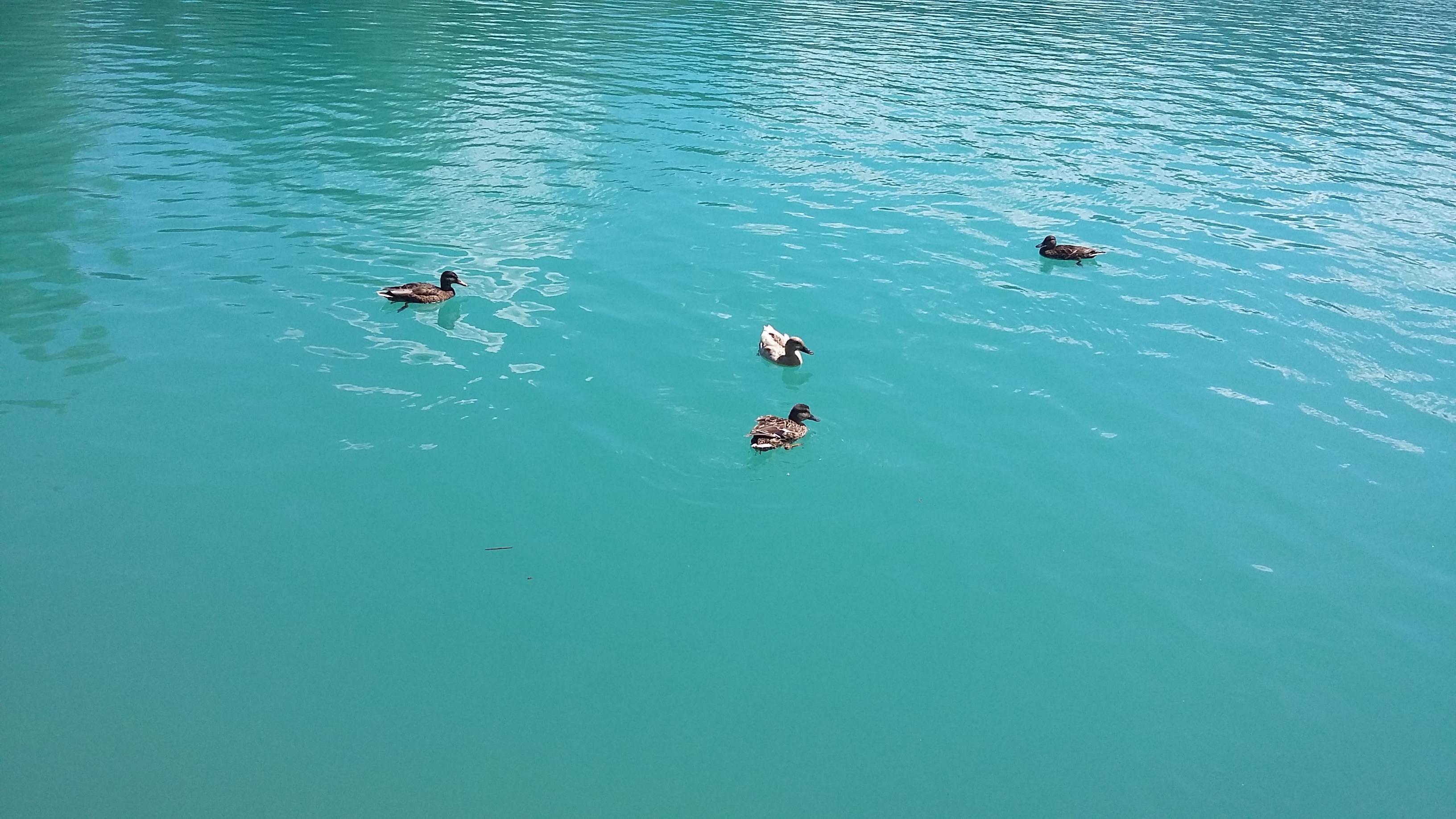 Niesamowity kolor wody w Faaker See najlepiej widać w słoneczny dzień
